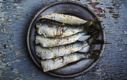 La Fundación Vicente Tormo participa en la I Mostra de Pesca Artesanal, Turisme i Territori de la Mediterrania